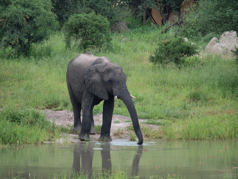 The waterhole, Elephant Sands Camp, Nata