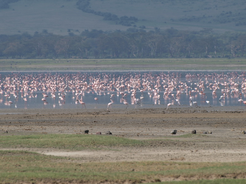 Flamingoes, Ngorongoro Crater