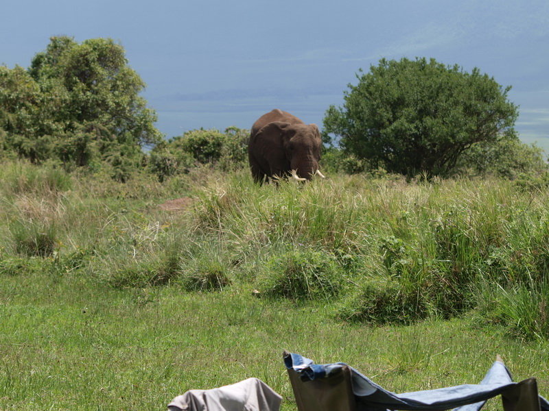 Elephant in our camp, Ngorongoro Crater