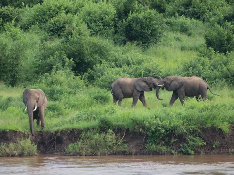 Elephants across the river at Kiamba Camp