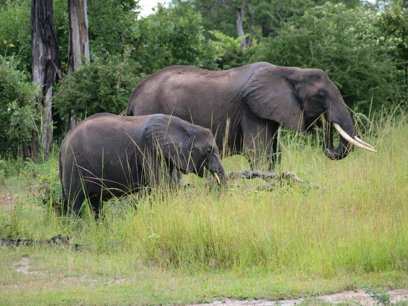 Elephants, South Luangwa National Park