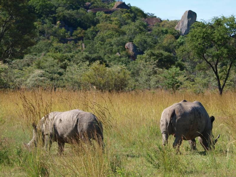 White Rhino, Matobo Game Park