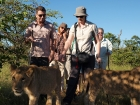 Walk with the lions, Victoria Falls