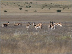 Springboks, on the way to Purros