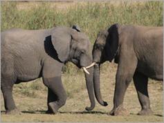 Vwarza Marsh Wildlife Reserve