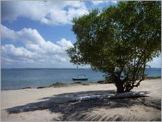 Libelula, Nacala Bay