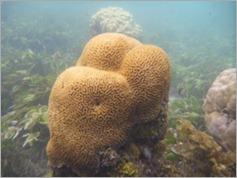 Snorkelling trip, Peponi Beach Resort, Pangani