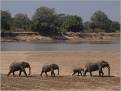 View from Croc Valley Camp, South Luangwa National Park