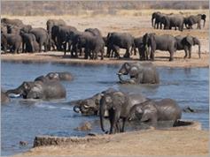 Nyamandhlovu Pan, Hwange National Park
