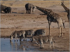 Nyamandhlovu Pan, Hwange National Park