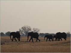 Ngweshia waterhole, Hwange National Park